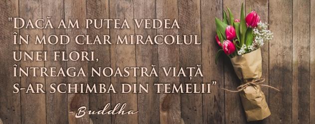 citat-flori-buddha